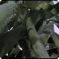 Vídeo: We're not in Kansas anymore - A referência mais usada do cinema?