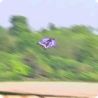 Vídeo: O paraquedista que saltou (e aterrissou) sem usar um paraquedas