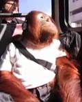 O Macaco Ator
